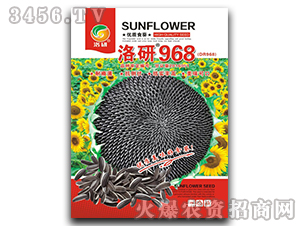 洛研968-优质食葵-华为种业