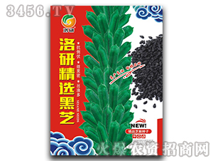 洛研精选黑芝-芝麻种子-华为种业