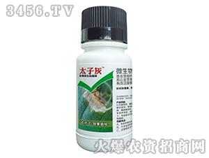 小檗碱-太子灰-台湾豆本豆