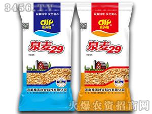 泉麦29-小麦种子-未农种业