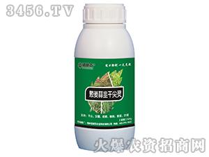 葱姜蒜韭千尖灵-诺威克