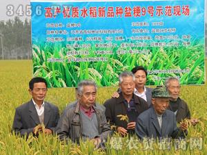 盐粳9号-水稻种子-高科种业