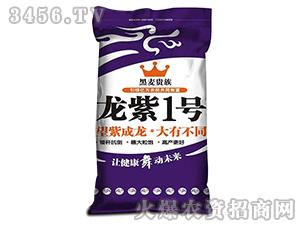 龙紫1号-黑麦贵族-龙大种业