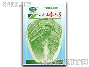山东六号-白菜种子-云寿