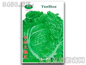 火锅菜-白菜种子-云寿