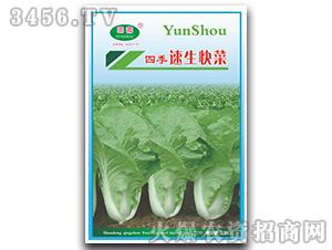 四季速生快菜-白菜种子-云寿