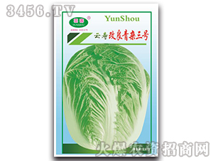 改良青杂三号-白菜种子-云寿