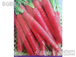 红称杆胡萝卜种子-禾圣瑞