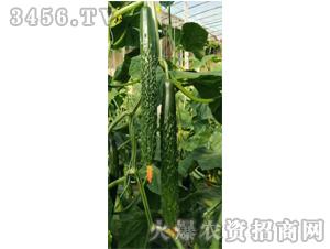 圣瑞油亮王-黄瓜种子-禾圣瑞