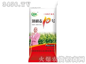 小麦种子-济研麦10号-群帅农业