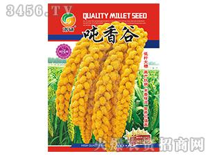 谷子种子-吨香谷-洛研