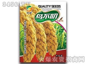 谷子种子-鸟不叼-洛研