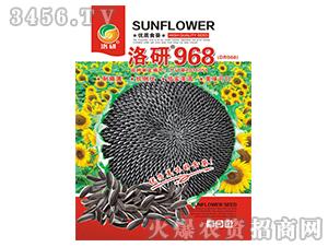 向日葵种子-洛研968-洛研