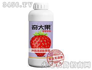 草莓专用冲施滴灌膨果肥-奇大果-星泉农业