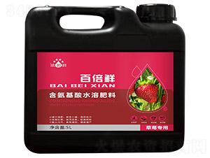 草莓专用含氨基酸水溶肥料-百倍鲜-天度生物