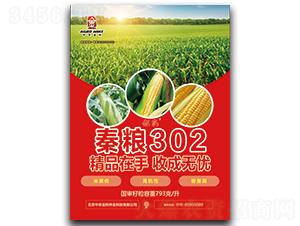 秦粮302-玉米种子-中农金科