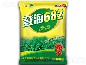 登海682-玉米种子-登海道吉