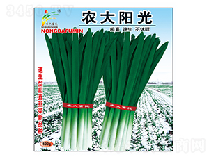 农大阳光-韭菜种子-农大富民