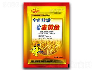 抗倒麦黄金-全能胖墩-为峰肥业