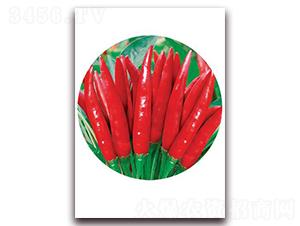 天宇精品-朝天椒种子-