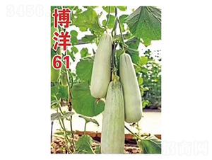 博洋61-甜瓜种子-凌