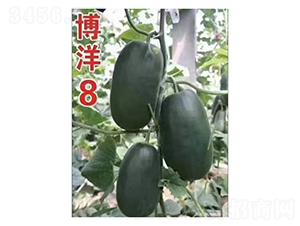 博洋8-甜瓜种子-凌广