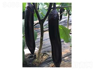 大龙长茄-茄子种子-凌