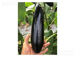 765长茄-茄子种子-