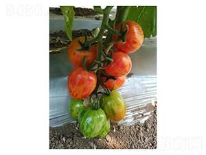 迷彩樱桃番茄-番茄种子