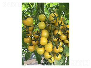 黄色樱桃番茄-番茄种子