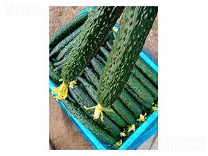 传奇778-黄瓜种子-凌广农业
