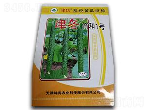 津冬育和1号-黄瓜种子-凌广农业