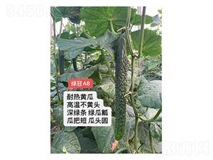 绿冠A8-黄瓜种子-凌广农业