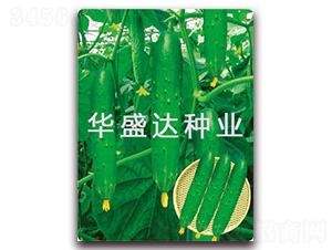 盛达3号-黄瓜种子-华盛达