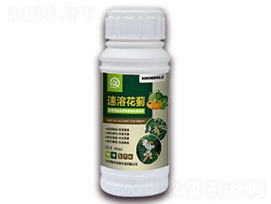 蓟马专用生物溶剂-速溶花蓟-强农生物
